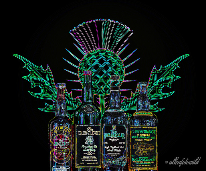 Happy Robbie Burns Day!<br /> <br /> I wanted to do something a little creative for Robbie Burns Day. This attempt  combines a Scottish thistle with some bottles of scotch.  Best seen at larger sizes (or after having consumed the contents of the bottles LOL)