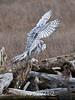 Owl-landing