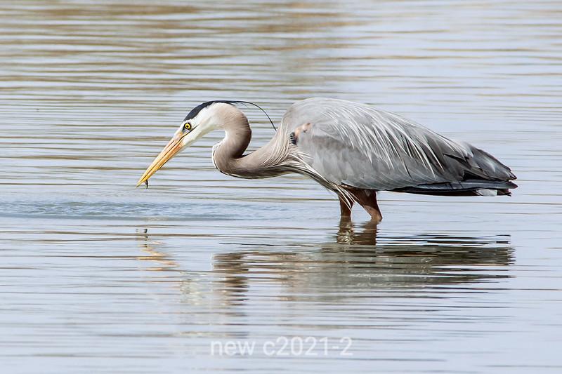 Big bird, small fish