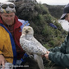 Owl Research Institute, Snowy Owl project, Dan Cox photo