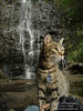 Snuggles the Adventure Cat : 1 gallery with 4 photos