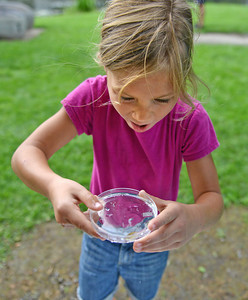 Amanda August/For The Daily Item Becca Yount, 7 of Middleburg, examines one of the fish caught in Penns Creek on Saturday morning as part of the Ecology and Outreach Program held by the Lower Penns Creek Watershed Association in New Berlin. Kids were invited to collect insect and fish specimens from the creek and then to examine them more closely under the microscopes.