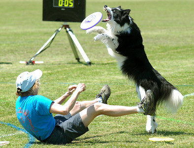 Joan Cleveland of Falls Church, Va. stays low as her dog, Ki, makes the grab in the free-style competition at the second annual Lucy's Luau at the Middleburg Fireman's Fairgrounds on Edmond Avenue Saturday May 19, 2012.