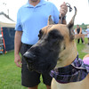 Middleburg Dog Show :