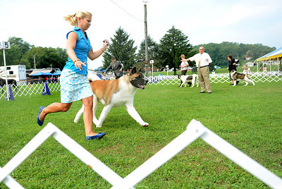 Heather Bremmer of Blandon leads, Trader, an Akita owned by Tom Bavaria of New Smithville, around the ring during the 42nd All-Breed Dog Show and Obedience Trial Saturday Aug. 25, 2012 at Middleburg Fireman's Fairgrounds.