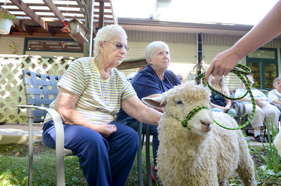 Grace Benfer, left, Beavertown, and Carolyn Landis, pet Dale, who was at the Penns Creek Adult Resource Center on Monday, as the PA Lamb and Wool Queen, Ashley Shaw of Harrisburg, visited.