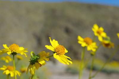 Anza Borrego - Blow Sand Cyn & Goat Trail - 4/11/10