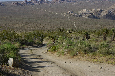 Geology Tour Road, Joshua Tree National Park.