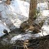 Shot of the creek