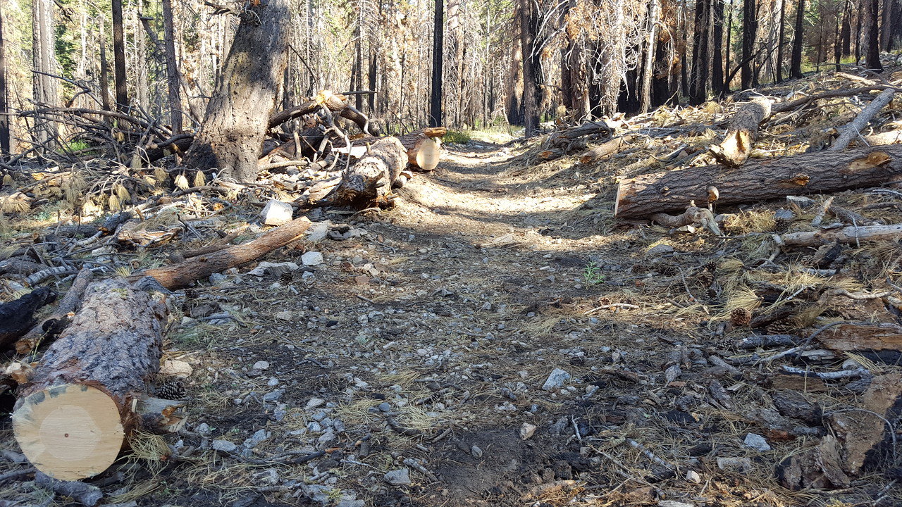 Trees Removed Trail Cleared (by Shawn Sisler)
