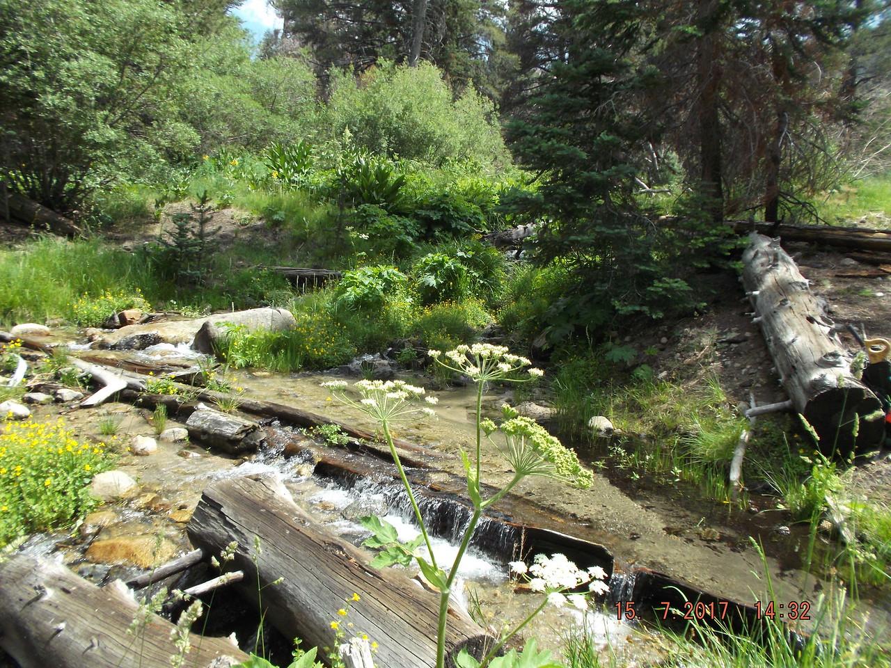 One of four streams through So. Fork Mdws area (by John Flippin)