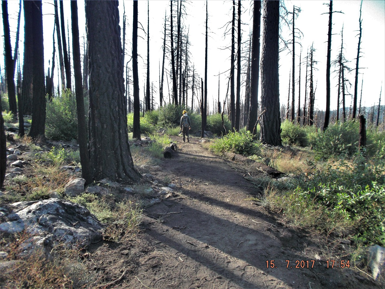 Newly cleared trail (by John Flippin)