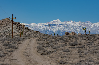 At the crest between Panamint Valley and Owen's Valley this dirt road leads into a study of contrasts between Joshua Trees and the snow of the Eastern Sierras