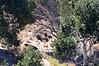 Buffalo hiding in the trees.  William S. Hart Ranch Santa Clarita  082111