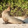 Wildlife, Seal