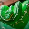 Green Snake, Wildlife