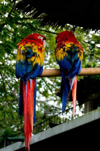 Wildlife, Parrots,