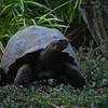 Wildlife, Tortoise