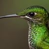 Wildlife, Hummingbird