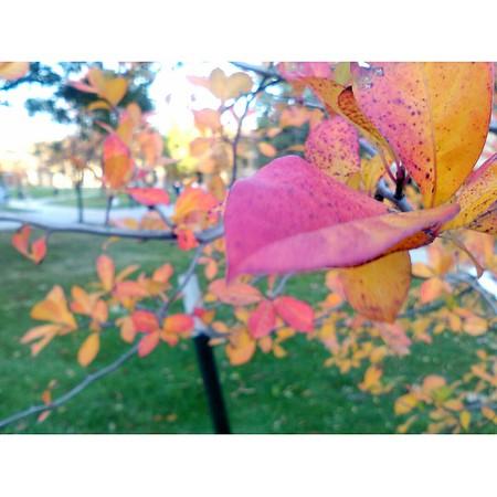 Fall/Winter Campus Photos