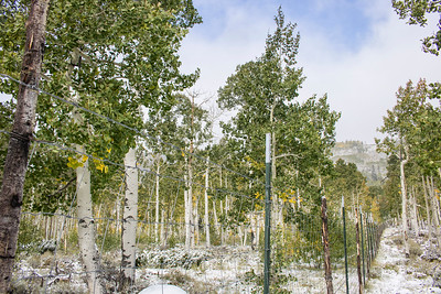 Fences: Pando Forest | Fishlake, Utah