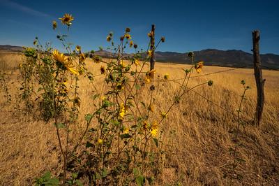 Great Basin: Mt Washington