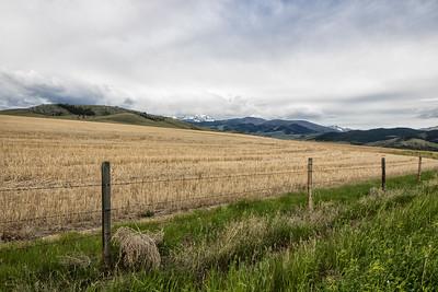Fences: Tobacco Mountain Farmland, Montana