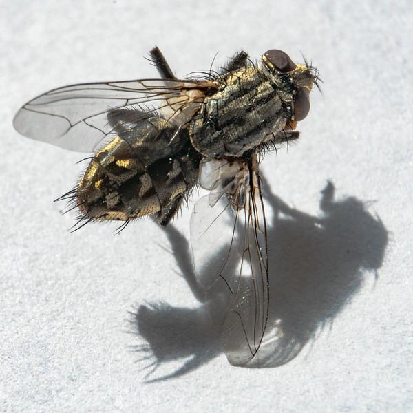 Aneta Zimnicki fly (2)