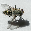 Aneta Zimnicki fly (1)