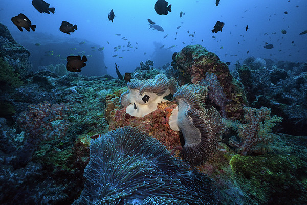 Coral Reef - Thailand