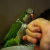 The bird lurks on the sofa