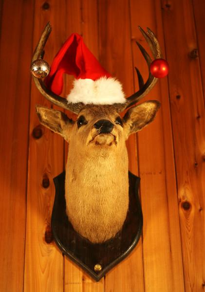Festive Christmas deer