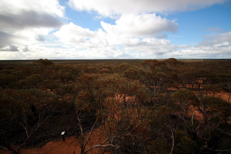 Views from a lookout in the Hattah-Kulkyne NP.  This was just a snapshot of one segment.  The rest of the view?  Looked exactly the same.