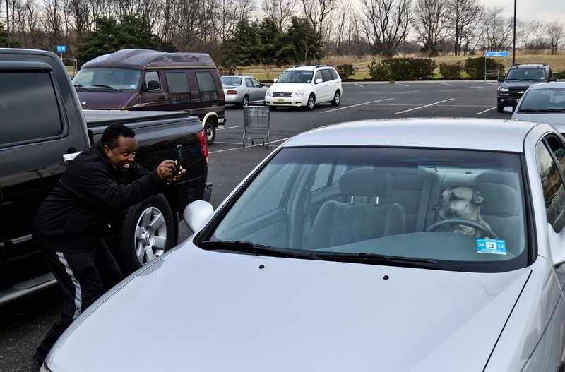 Day Eleven. 1/11/2012. A man saw a dog sitting in a parked car. He laughed loudly as the dog sat in the driver seat -- so he took a picture. Another man saw him taking the picture and so he started taking pictures. A woman saw the two men taking pictures and so she took pictures. When I saw all the people taking pictures, I decided to take pictures of the people taking pictures. The front of the car at one point had five people aiming cameras at it. The dog was essentially unfazed.