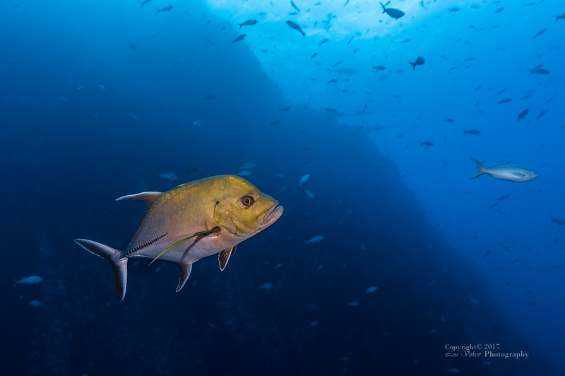 Socorro Islands Underwater