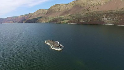 2  Lake Lorene Summer bird-nesting island