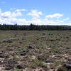 vegetation transects on extremely stony Knotmer soil, OR683