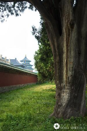 Beijing 15 augusti - Tiantan   天壇 (Himlens tempel)