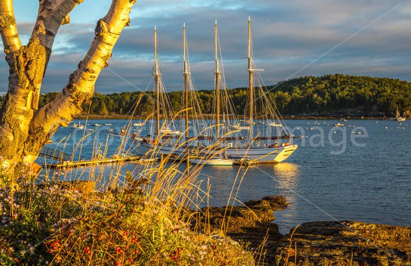 Maine - Acadia - Sojourn - D2-C2-0070 - 72 ppi