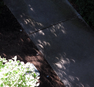 Crescent-shaped shadows on pavement during eclipse maximum.  Sierpowate cienie na chodniku podczas najwiekszego zacmienia.