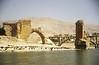Big flock of sheep along Tigris shore