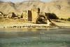 Big flock along Tigris shore