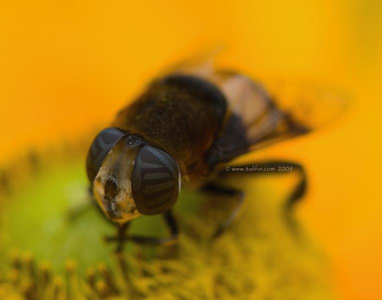 Bee eyes