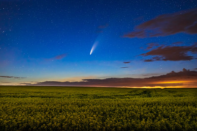 Comet over Canola Field (July 15, 2020)