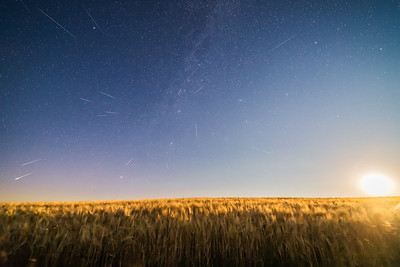 Perseids over Moonlit Wheatfield