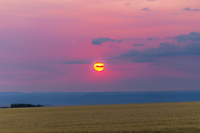 Rising Red Sun over Wheatfield