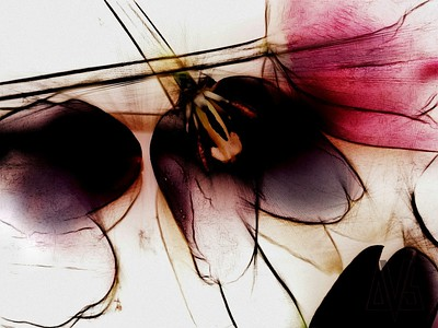 'tulips' - Abstract florist collection