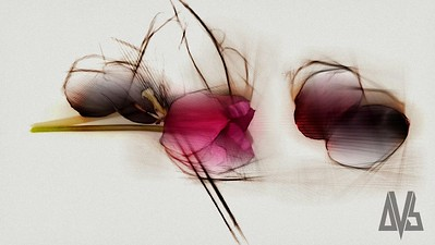 '...Something Beautiful and Clear' - Abstract florist collection
