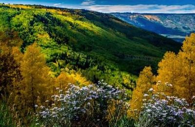 Fall Colorado Web