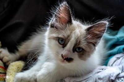 Amy's Kitty, Stash